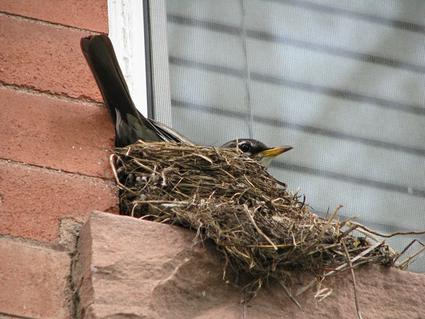 Birdmay10c