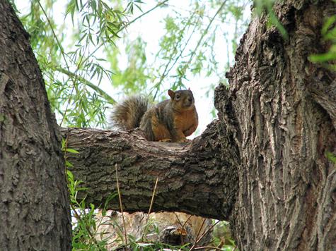 Squirrelmay15